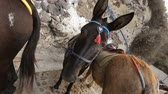 осел : Several donkeys with riding equipment standing on road by wall, riding animals Стоковые видеозаписи