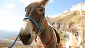осел : Riding donkey standing outside against cliff, male petting its face, tourism