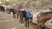 осел : Line of donkeys with saddles, stirrup ready to be ridden standing road, tourism