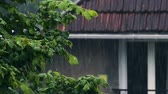 living environment : Green tree in front of house in rainy weather, garden nature, autumn nostalgia