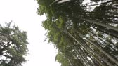 batumi : Evergreen bamboo plants bottom view, rest in park, tropical climate plants Stock Footage
