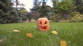 ухмыляясь : Girl running near pumpkin Jack lying on lawn, playing and celebrating Halloween
