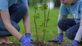 reforestation : Young woman and female kid planting bush in park, forest conservation, wildlife Stock Footage