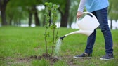 パークランド : Child watering bush in park, nature protection, reforestation school project