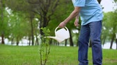 reforestation : Mature male watering green plant park, responsible eco volunteer, reforestation