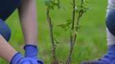 reforestation : Smiling little girl and woman planting tree in park, environmental volunteering Stock Footage