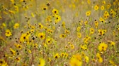 Уайлдфлауэр : Field of Wild Flowers - Time Lapse