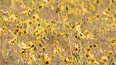 Уайлдфлауэр : Field of Wild Flowers Time Lapse