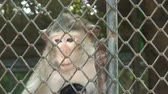 azie : Aap bij Wildlife Zoo Thailand Stockvideo