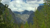 borovice : Yosemite Mountain Scene