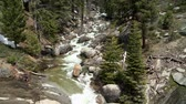 yosemite : Forest Stream Stock Footage