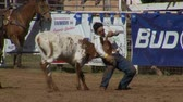 kuh : Rodeo Cowboys - Bulldog Steer Wrestling in Zeitlupe Stock Footage