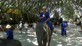 thai : Elephants at Wildlife Zoo Thailand Stock Footage