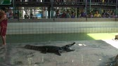 azie : Alligators bij Wildlife Zoo Thailand Stockvideo