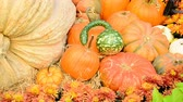 squash family : Fall Season Display Stock Footage