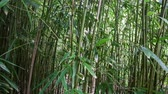 vegetação : Dolly of Hawaiian Bamboo Forest  - 4K -  4096x2304