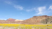 jedzenie : Pan Down  - Death Valley Desert Flower Super Bloom - Spring