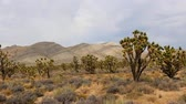Zoom Out - Joshua Tree en el Scenic Mojave Desert
