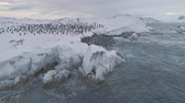 pingouin : Antarctica penguins colony. Aerial drone view flight over swimming, standing Emperor penguins groups. Antarctic wildlife among snow ice sheet and raging ocean. 4k