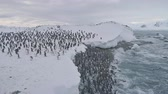 tučňák : Penguin colony after swimming. Antarctica aerial flight. Overview polar ocean water, snow shore. Large group of Gentoo penguins swims and stands up to the ice frozen coast. Winter shot. 4k footage. Dostupné videozáznamy