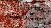 decomposing : Rotten birch bark turned to red still image video