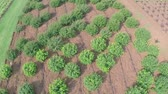 plântula : Cultivation of plants panorama, general plan, Garden center, Aerial shooting, from above