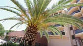 raio de sol : Palm tree growing in front of the main building of the Hotel Vídeos