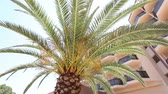 afrika : Palm tree growing in front of the main building of the Hotel Dostupné videozáznamy