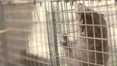 olhos castanhos : The mink in the cage, close-up, Otter on the farm