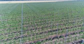 plântula : A view of the seedlings of trees from the air, flying over tree seedlings, a garden center, a young apple garden on the field, Rows of tree saplings in the Young apple garden, 4k, aerial