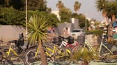 припаркован : Cars on the streets of the resort city, bicycles and a palm tree on the background of a city highway in a resort town, summer, traffic, shallow depth of field Стоковые видеозаписи
