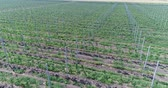 garden center : A view of the seedlings of trees from the air, flying over tree seedlings, a garden center, a young apple garden on the field, Rows of tree saplings in the apple garden