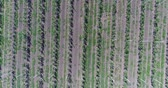 garden center : A view of the seedlings of trees from the air, flying over tree seedlings, a garden center, a young apple garden on the field, Rows of tree saplings in the Young apple garden, 4k, aerial