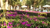 flowerbeds : Colorful flowers close-up, panorama
