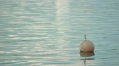 porta : A buoy floating on the surface of the water. Long shot