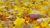 tee tasse : A cup of coffee with yellow fallen leaves background