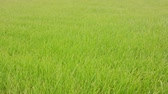 schoonmaken : Green grass background. Soft focus Stockvideo