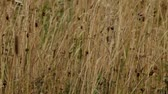 veld : the prairie wild plants background Stock Footage