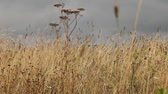 veld : steppe in the late summer Stock Footage
