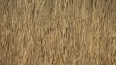 метелка : wilderness dry cattail fast shutter abstract background