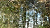 reflected : Meltwater impassable forest swamp in  spring, reflected in water, abstract background loop Stock Footage