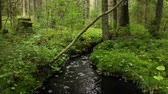 кора : Black water in a creek, wildlife beautiful forest landscape.