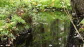 отраженный : pure cold water stream, greenery forest reflected in brook