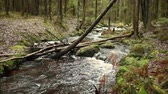 pedregulhos : Fast forest river, fallen tree above the stream. Stock Footage