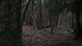 ствол : Gloomy autumn forest, bare trees, earth is strewn with fallen leaves. Стоковые видеозаписи