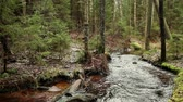 karelia : cold and fast forest river, Karelia autumn landscape Stock Footage