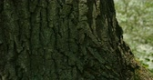 ствол : Bark tree in closeup