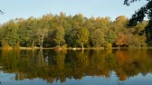 反射された : Beautiful panoramic scene yellow trees autumn summer