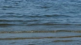 transparente : waves slowly come ashore, calm sea landscape Stock Footage