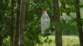 frasco pequeno : homemade bird feeder from a plastic bottle